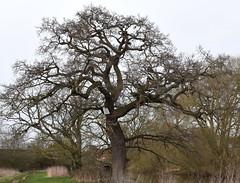 DSC_8959 (PeaTJay) Tags: nikon england uk gb royalberkshire reading winnersh flowers plants trees bushes