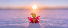 11/52 - Nostalgia (Reiterlied) Tags: 1835mm angle aria butterfly d500 dslr lego legography lens minifig minifigure nikon photography reiterlied sigma snow stuckinplastic sunset toy wide winter