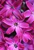 IMG_6916 (Usagi93190) Tags: macro flower biltmore estates greenhouse gardens ashville north carolina