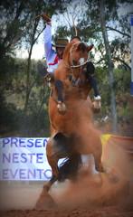 Tales Vargas e Milonga da Figueira (Eduardo Amorim) Tags: gaúcho gaúchos gaucho gauchos cavalos caballos horses chevaux cavalli pferde caballo horse cheval cavallo pferd pampa campanha fronteira quaraí riograndedosul brésil brasil sudamérica südamerika suramérica américadosul southamerica amériquedusud americameridionale américadelsur americadelsud cavalo 馬 حصان 马 лошадь ঘোড়া 말 סוס ม้า häst hest hevonen άλογο brazil eduardoamorim gineteada jineteada
