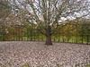 Hampton Court Park (schaefer.robert) Tags: london hampton court park garden autmn