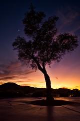 Arizona Sunset (mjhedge) Tags: tree dusk sky landscape sunset mountain colors desert arizona phoenix fujifilm fuji xpro2 xf14mmf28