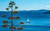 Kastela Bay (fotofrysk) Tags: kastela bay tree park water sea sky blue adriaticsea theadriatic marjampeninsula parksumamarjan marjansummitpark localbusride istriamontenegroroadtrip croatia split adriaticcoast dalmatiancoast sigma1750mmf28exdcoxhs nikond7100 201710079816