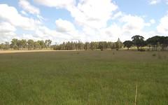 194 Emu Park Road, ELLANGOWAN via, Casino NSW