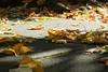 Autumnal (Spannarama) Tags: leaves autumn autumnleaves fallenleaves sunlight sunshine tree lowviewpoint ratseyeview blackheath london uk ground pavingstones moss