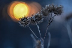 Sunset and bur. (agnieszka.a.morawska) Tags: winter bkhq beyondbokeh bokehlicious dof helios helios44m bur sun sunset bokeh