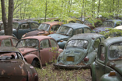 The Volkswagen Graveyard (Sean M Richardson) Tags: abandoned volkswagen vw bugs beetle old classic vintage colors canon usa rust texture perspective ruins ruinas decay derelict historic history vibrant naturetakesover cars