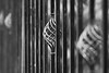 an iron fence (kinaaction) Tags: blackandwhite sonyilce6000 iron fence fencedfriday fencedetail bokeh bw 7dwf