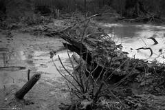 DSC02134 (Distagon12) Tags: nature landscape landshaft paysage mélancolique hiver marais lac lake noiretblanc blackwhite blackandwhite