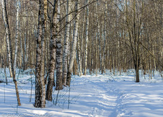 2018-03-19-08-47-38-7D2_4021 (tsup_tuck) Tags: 2018 march moscow spring woods