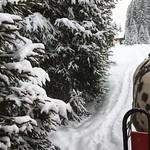 In Snow. thumbnail