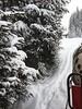 In Snow. (marfis75) Tags: winter cold kältercold kälte kalt clea day fahren forrest wald iphone marfis75 urlaub ski österreich hirschegg märz march white tree tannenbaum tanne schlitten horse pferdekutsche ps pferdestärken schimmel kutsche snowing schneien schnee