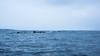 Ballena - Punta de Choros (Isaak Espincar) Tags: mar chile coquimbo punta de choros delfines ballenas rocas barcos