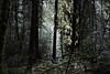 Random forest shot (rozoneill) Tags: north umpqua trail river swiftwater park bobs creek butte deadline falls oregon hiking national recreation forest idleyld roseburg glide