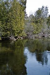 Eramosa River Reflection (jeffyphotos) Tags: eramosariver trees water logs
