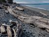 West Beach (Ramona H) Tags: deceptionpass deceptionpassstatepark pugetsound wa washingtonstate westbeach whidbeyisland beach drift driftlogs