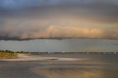Dog Beach - 3 (MindMiles) Tags: stratocumulus yellow sunset dog seagulls storm clouds stormy honeymoon island summer