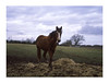 Provia Pony (OliverJohnFernandez) Tags: portrait film natuer nature provia fujifilm 100f bronica etrsi mediumformat mediumformatfilm photography 120film photo