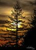 sammamish at sundown (mitchell haindfield) Tags: douglasfir evergreen evergreenstate westcoast pacificnorthwest washington state tree vivid saturation clouds sunset