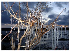 Chilly Afternoon (Orion 2) Tags: icicles trail lake trees chilly cold hiking newfoundlandandlabrador canada