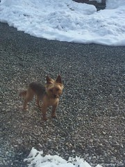 Mon, Mar 19th, 2018 Lost Male Dog - Redgap, Rathcoole, Dublin (Lost and Found Pets Ireland) Tags: lostdogredgapdublin lost dog redgap dublin march 2018