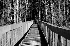 Bridge to the woods (briannalhendricks) Tags: canonrebelt6 canonrebel canon woods trail path nature