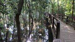 Pasir  tour with the Naked Hermit Crabs, Mar 2018 (wildsingapore) Tags: pasirris people guiding mangroves marine coastal intertidal shore seashore marinelife nature wildlife underwater wildsingapore singapore