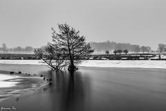 Snow (Andyxuxuxu) Tags: 6d canon longexposure lake winter ice snow richmond london