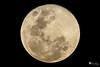 The moon (Mar 2, 2018) (Hồ Viết Hùng (Thanks so much for 1mil. views!) Tags: moon spherical nature space nikond800 landscape vietnam saigon sky galaxy