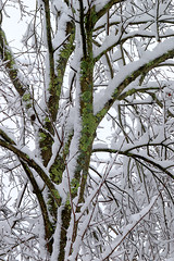 March madness (cheryl.rose83) Tags: snow storm frozen quinn tree lichen massachusetts newengland