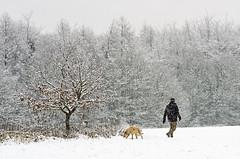 One man and his (GaryJohn) Tags: pentaxk5 pentaxlimitedlens westyorkshire yorkshire stortheshall woodland trees snow winter