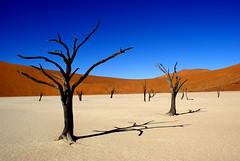 Sossusvlei, Namibia (Loïc BROHARD) Tags: sossusvlei deadvlei namibia desert dunes africa nature landscape