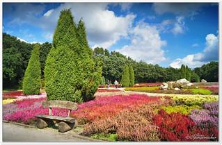 Farbenrausch im Heidegarten