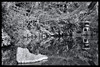 Tokyo: Impressions of a great city (Matthias Harbers) Tags: park tree cherry blossom spring hobby photo life nikon 1 v3 dxo photoshop japan bw black white nikkor outdoor architecture elements topaz labs omot tokyo metropolitan living home monochrome city street impression car vr 10100mm f456 sports automobil supercar road nezumuseum