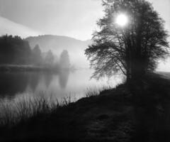 Misty Sunrise (str.ainer) Tags: sun sonne sunrise sonnenaufgang mist fog nebel dunst flus river trees baum bäume bw film schwarzweis grosformat largeformat 4x5 linhof schneiderkreuznach symmars ilford pf4 moersch ecofilmdeveloper hugin gimp sp445