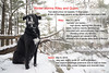 the story of riley and quinn (Stefanie Timmermann) Tags: riely quinn noreaster damage winterstorm forceofnature