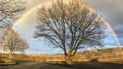 Under The Rainbow (camerue) Tags: regenbogen baum landscape natur