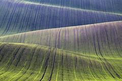 Among curves (Silva Predalič) Tags: green curves waves southmoravia grass deer landscape lines
