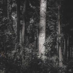 Hiraeth - Series 2 (KromOner) Tags: kromoner art design minimal dark nature forest trees woods silent solitude silence mood atmosphere quiet sunset canon austria