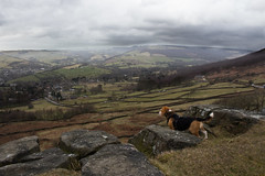 Admiring the View (phoebe.horner) Tags: canon camera 700d picture pictures photo photos photography photographer photograph uk britain england peak peaks district national park nature natural trust walk walking walks country countryside landscape landscapes hill hills rock rocky cliff cliffs track tracks colour cloudy clouds cloud moody dark beagle dog dogs pet pets animal animals