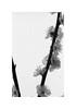 #34-18 (7things_and_photo) Tags: flower monochrome film visoflex japanese apricot