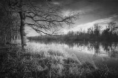 Watchman (xkolba) Tags: bug river bw blackandwhite mood podlasie march landscape riverbank water mirror tree poland old oak