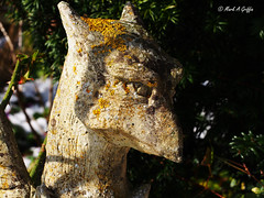 Griffin (mark.griffin52) Tags: olympusem5 england buckinghamshire cheddington stone griffin ornament garden statue