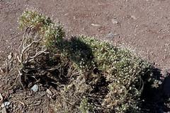 IMG_0260 (Ondřej Michálek) Tags: roques de garcía tenerife