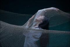 Sound of the the Sea (Niel Galen (IamRedBeard) - 25 Million+ picture vie) Tags: venus sea emotive studiolighting beautifulcurves