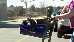 You drive (jcdriftwood) Tags: drive navigate cart petsmart street shoppingcenter pet push