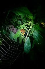 Durch den Regenwald (Anciet) Tags: amazonas colombia jungle south america