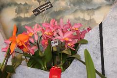 2018 JOS Show-0385 (tbottom) Tags: jos jacksonvilleorchidsociety jimroberts macrivenbark macsorchids staugustineorchidsociety suebottom floridasuncoastorchids thanhnguyen artrussell terrybottom orchids orchidsociety orchidshow orchidpictures cattleyas dendrobium oncidiums phalaenopsis
