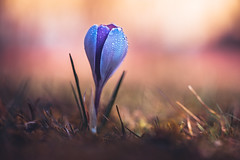 Mighty one (--StadtKind--) Tags: bokeh bokehaddicts bokehmasters bokehliicious dof depthoffield shallowdepthoffield sonyilce7r sonyfe90mmf28macrogoss flower fleur flores nature naturephotography macro macrophotography stadtkind