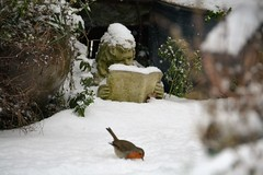 A Winter's Tale (suekelly52) Tags: snow winter snowfall garden gardenornament bird robin
